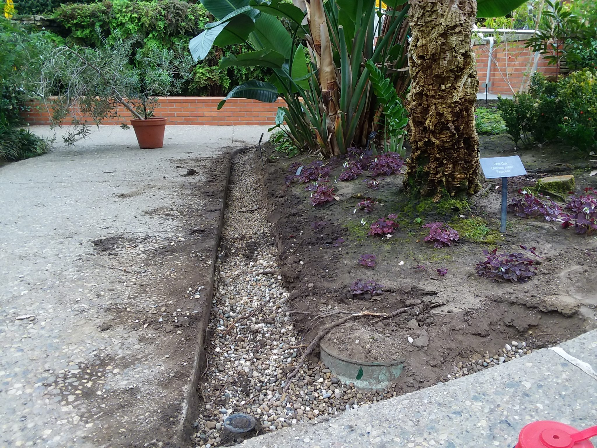 Prepping beds and oxalis