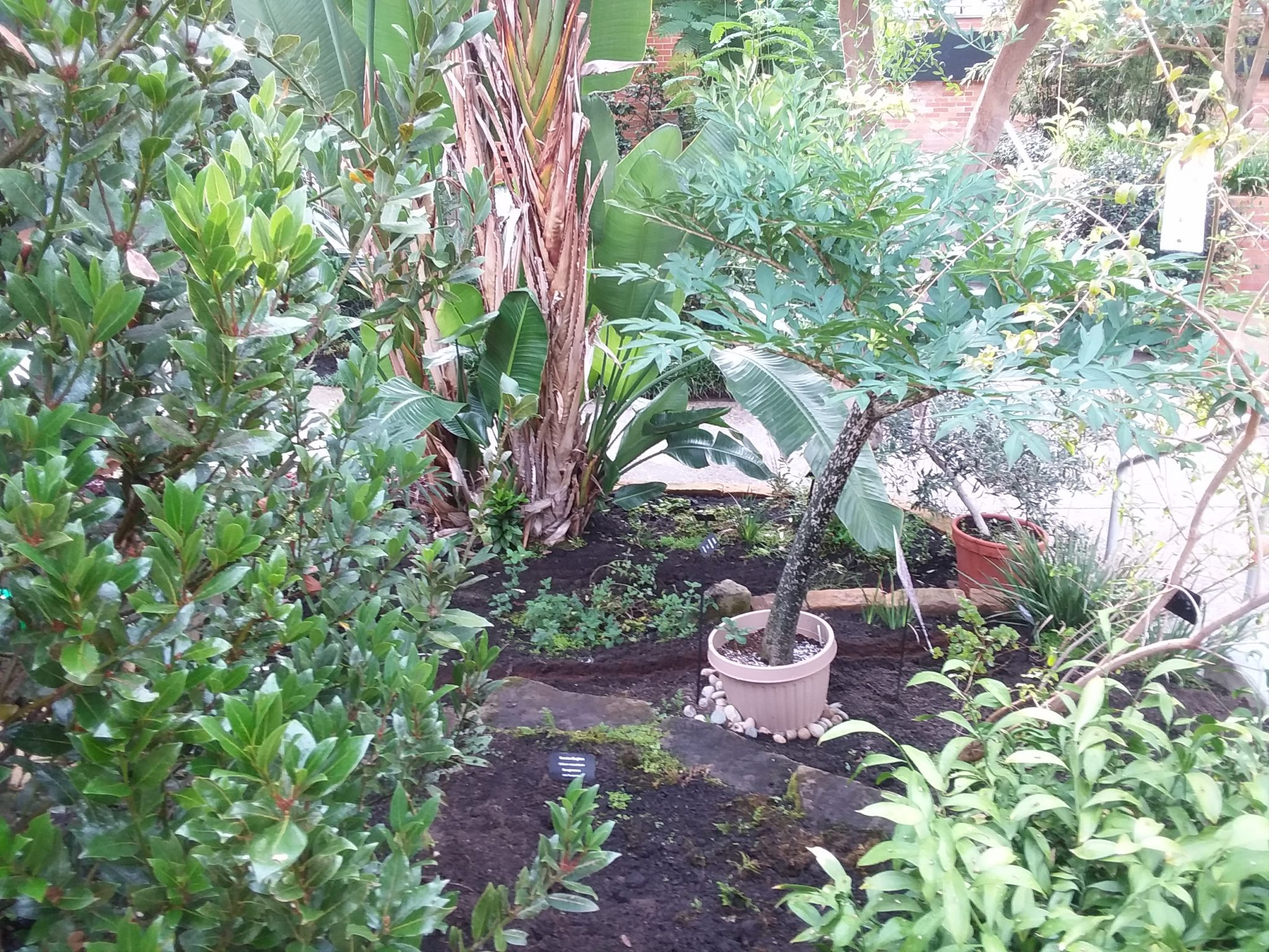 Terraces in tropical house