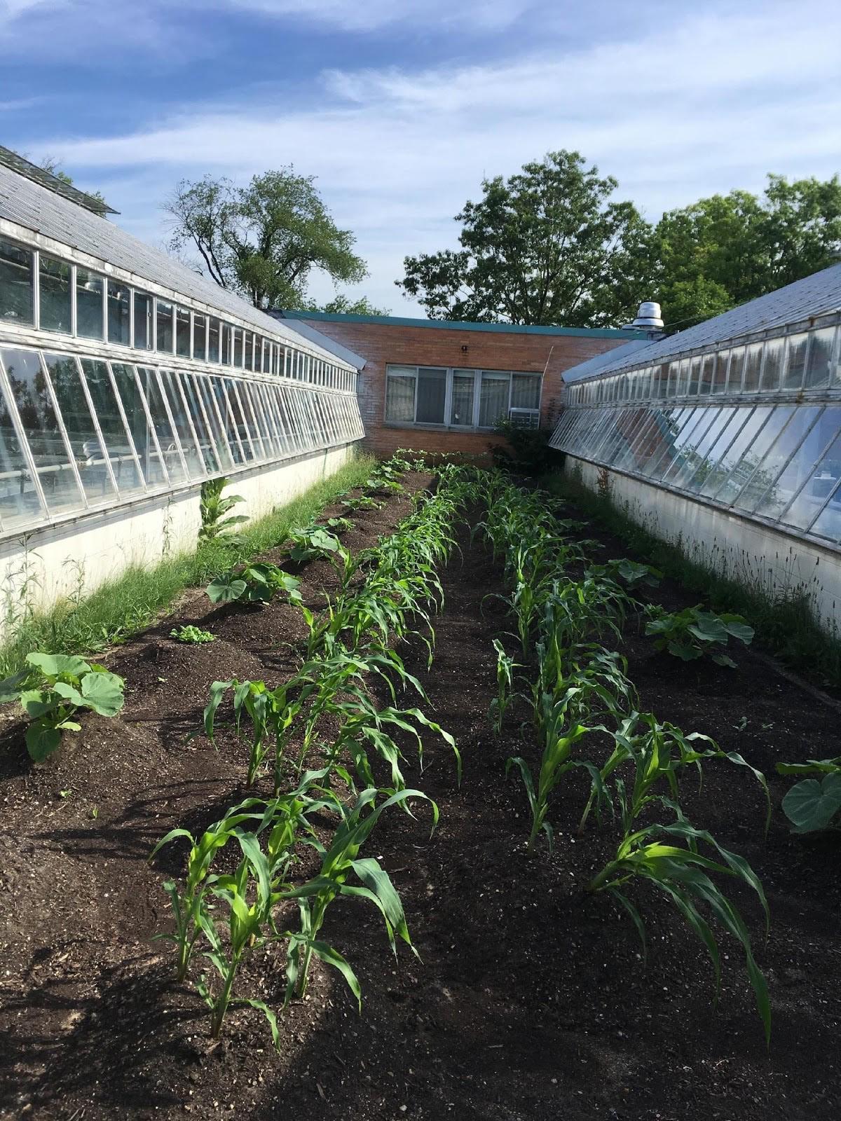The heritage seeds garden growing