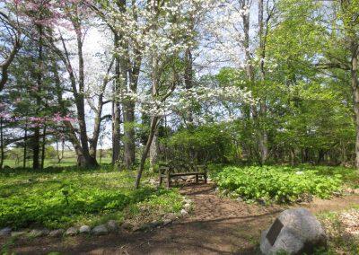 Spring in the Helen V. Smith Woodland Wildflower Garden at Matthaei.