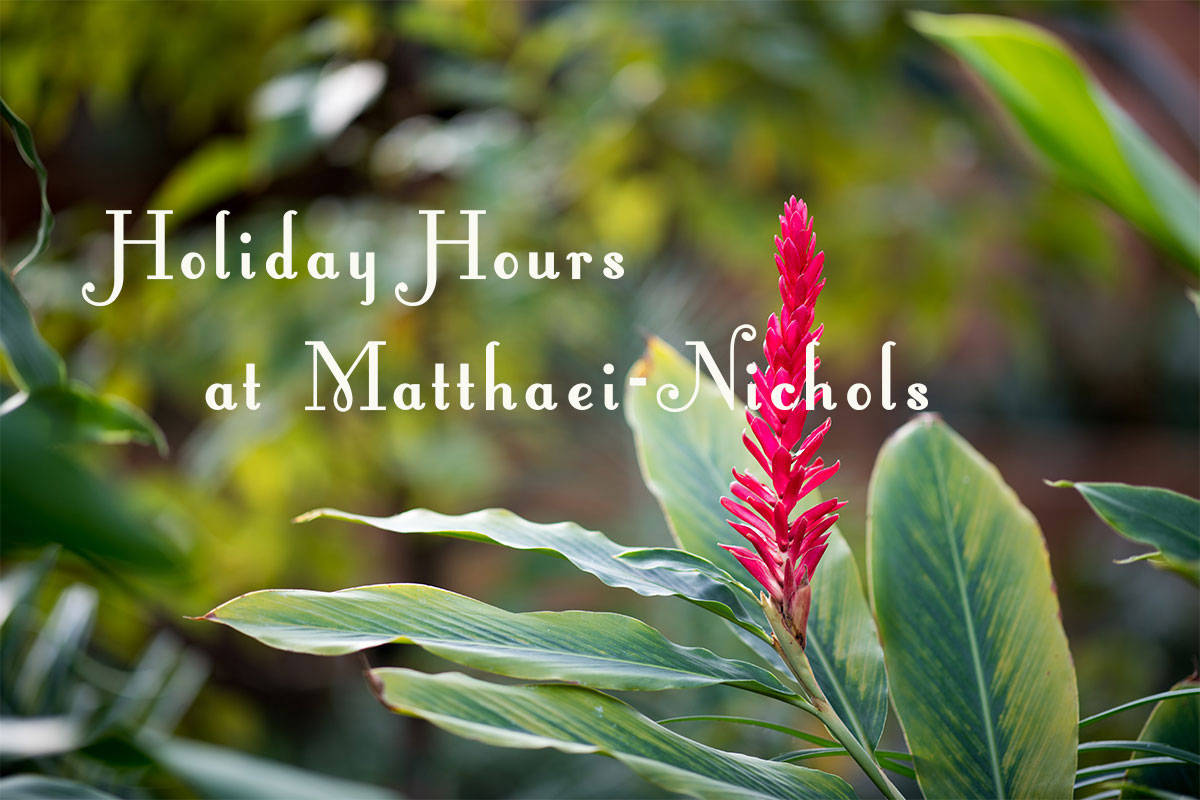 Holiday hours at Matthaei