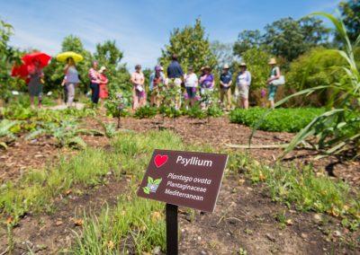 Visitors walk around the Medicinal garden at Matthaei. Photo by Austin Thomason.