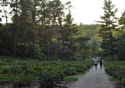Nichols Arboretum autumn by Michele Yanga.