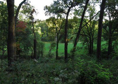 Nichols Arboretum autumn scene. Photo by Michele Yanga.