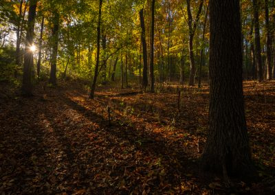 A fall morning in Nichols Arboretum. Photo by John Metzler.