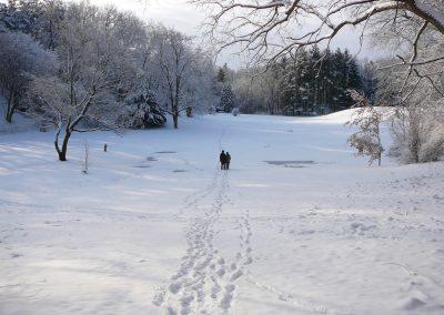 A winter walk in Nichols Arboretum