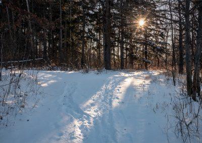 Early light on a snowy Matthaei trail