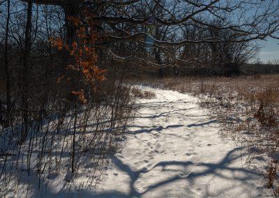 Shadows on the snow near an old oak at Matthaei