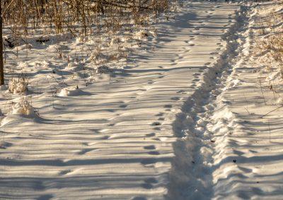Trodden snow on a path at Matthaei