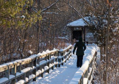 Wood bridge over wetland