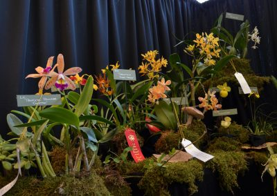 A scene from the 2018 Ann Arbor Orchid Society Festival. Photo by Michele Yanga.