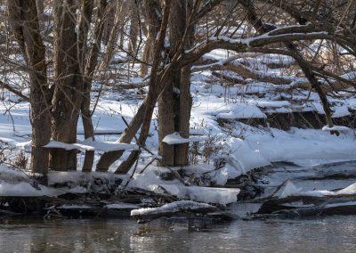 Curious ice shelves near Fleming Creek at Matthaei Botanical Gardens. Photo by John Metzler.