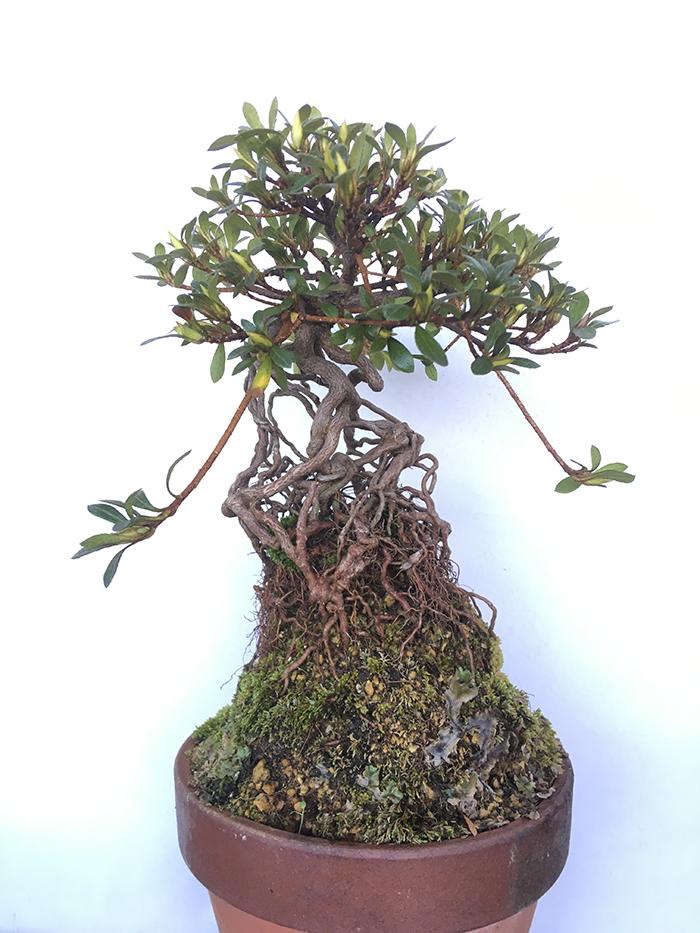 Beginner demo and workshop tree-hinomaru