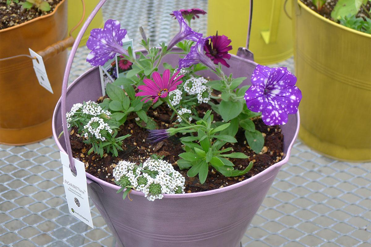 Flowers at Matthaei