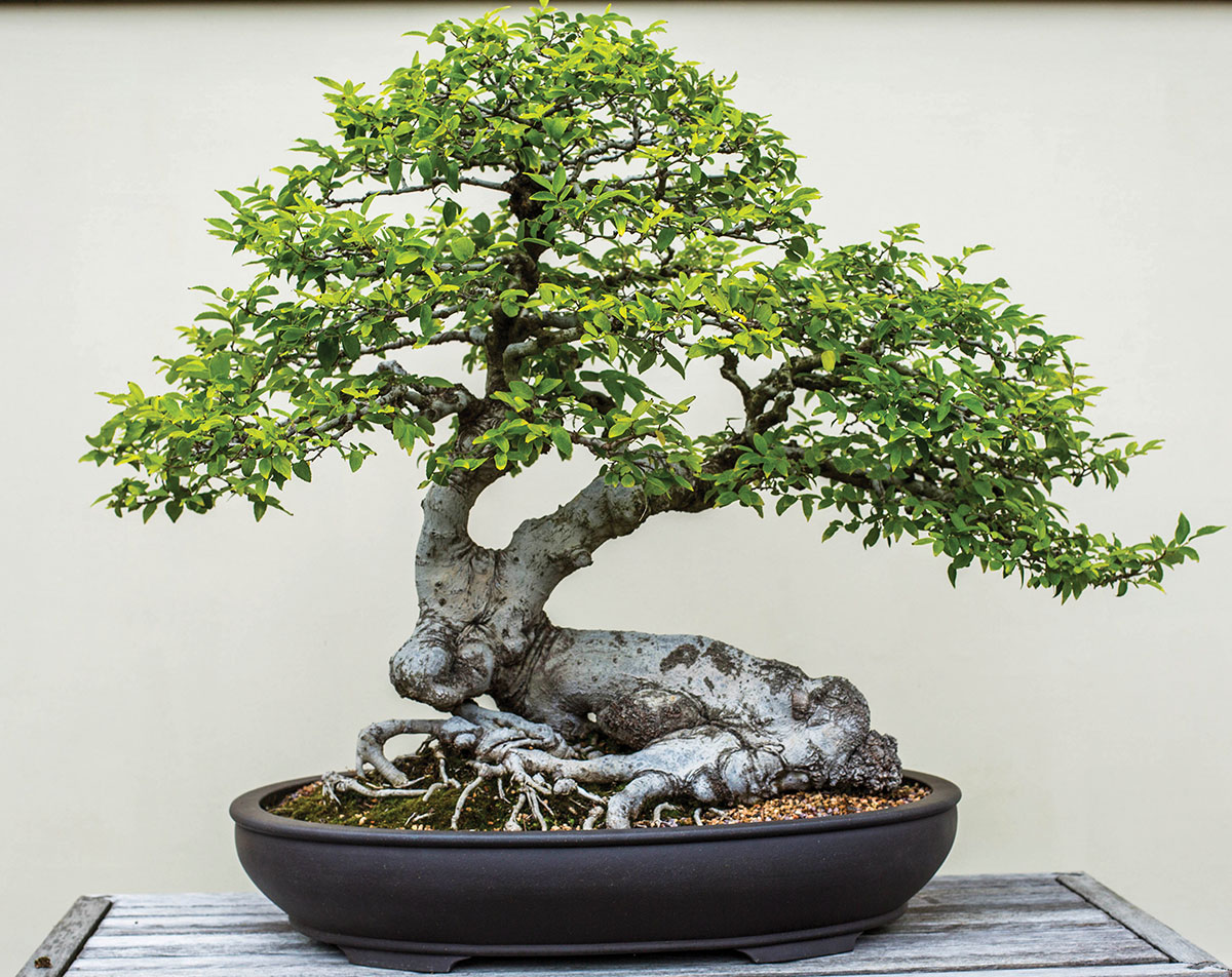 A bonsai with a trunk in the shape of a deer