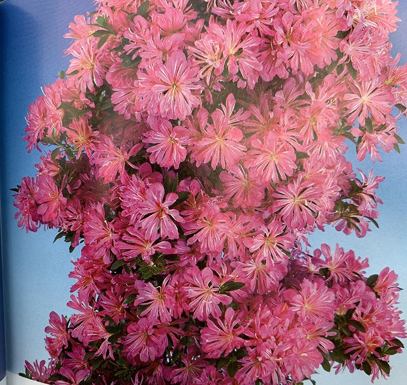 Intermediate workshop tree showing flowers