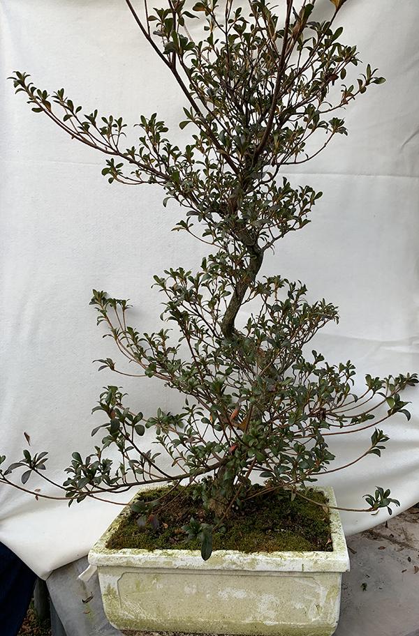 Intermediate workshop tree