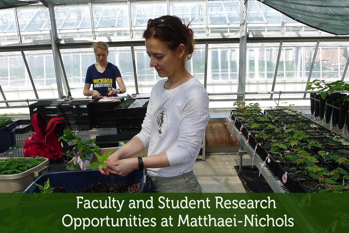 Research at Matthaei-Nichols