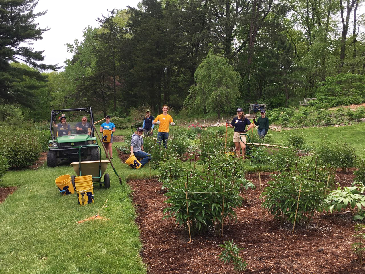 Interns working on prepping the peony garden for 2019 season