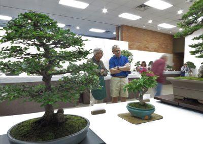 Ann Arbor Bonsai Society Show & Sale | Matthaei Botanical
