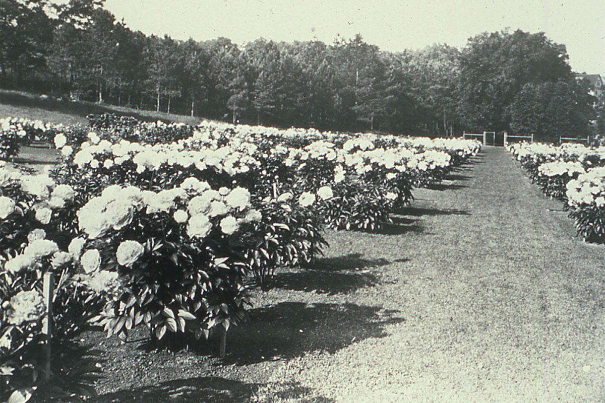 Historic-Peony_Garden_from-east