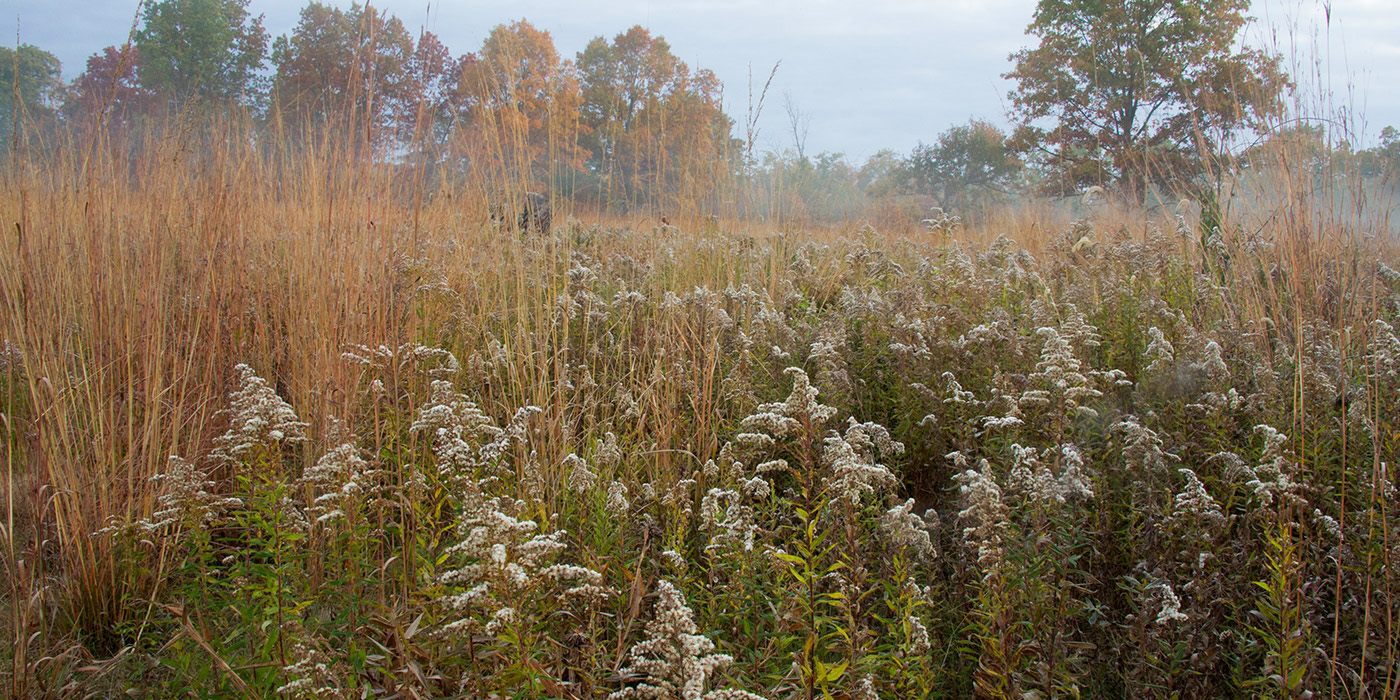 Oak openings evergreen trail-Toledo Metroparks