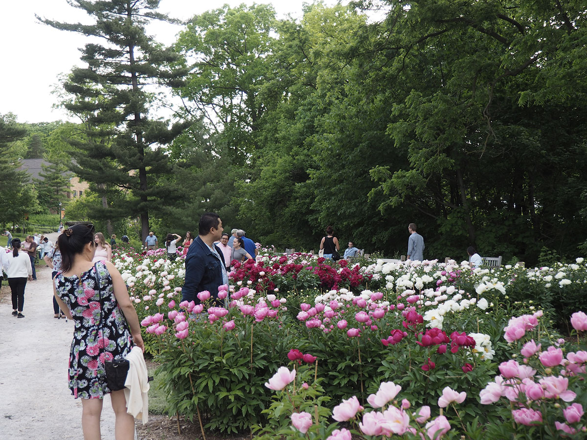 People-in-the-peony-garden