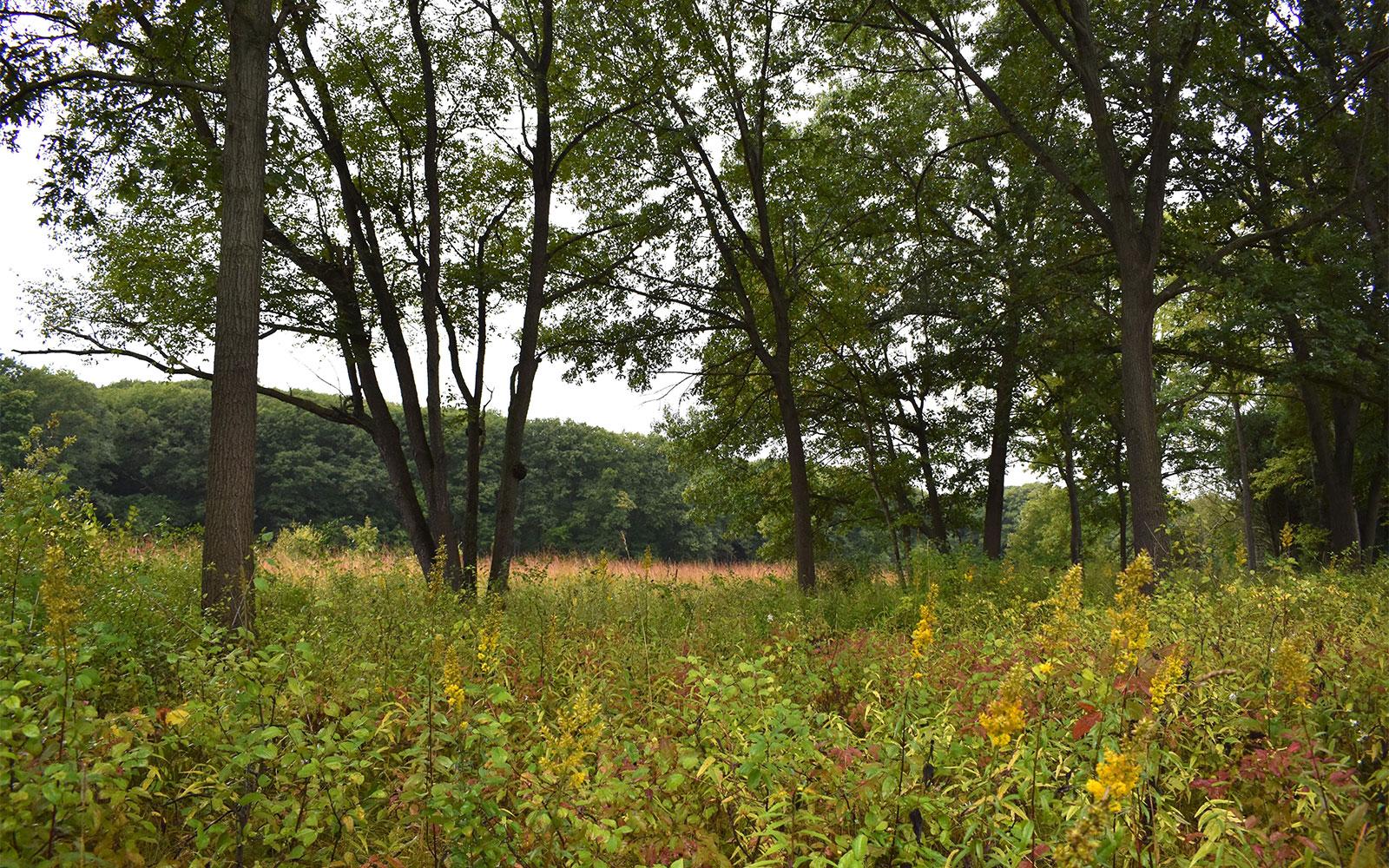 Arboretum-oak-openings