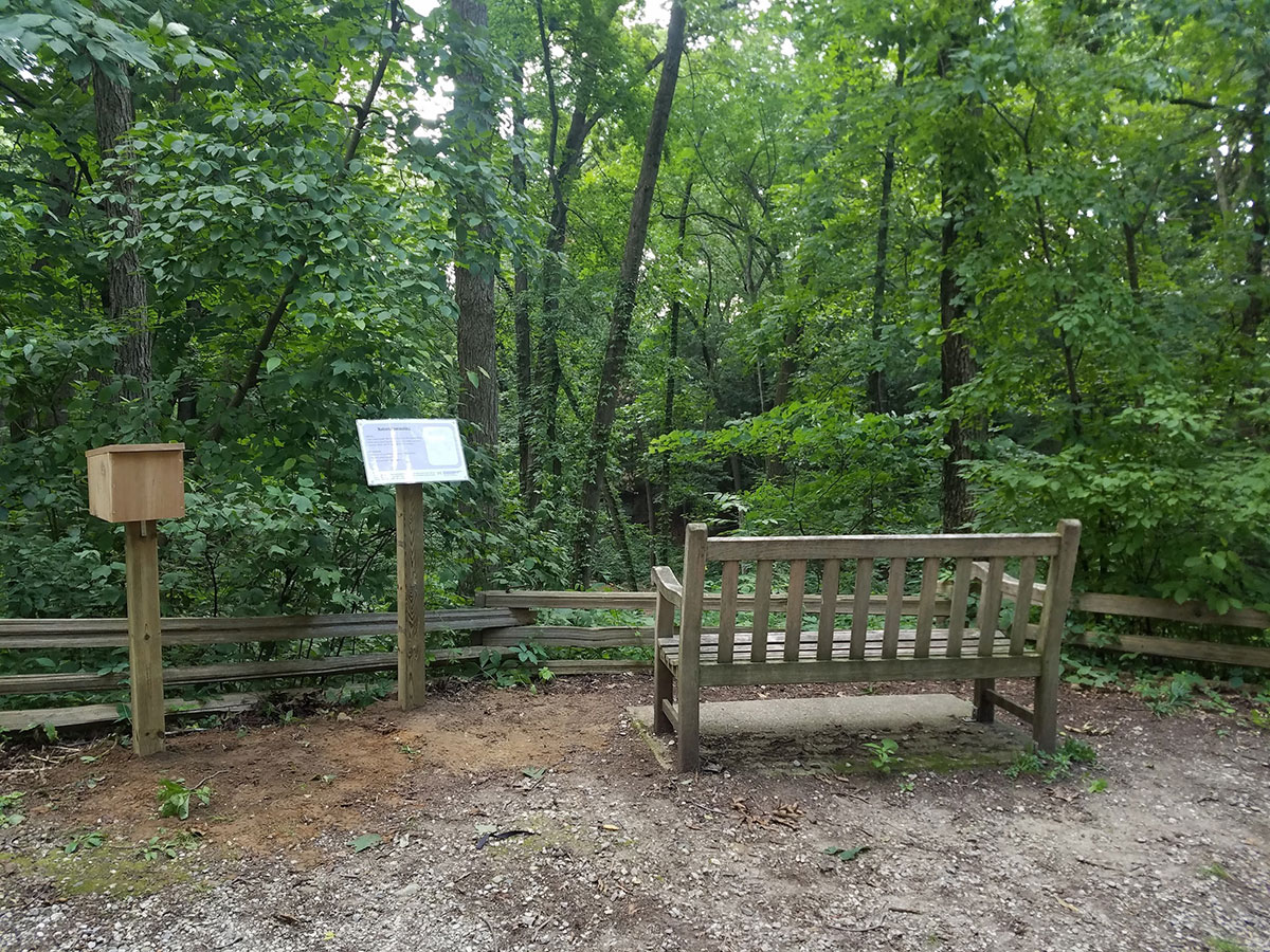 Bench in the Arb