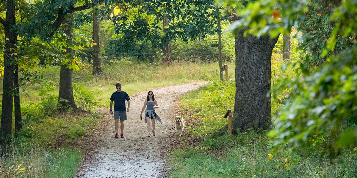 Dog-walking-in-Nichols-Arboretum