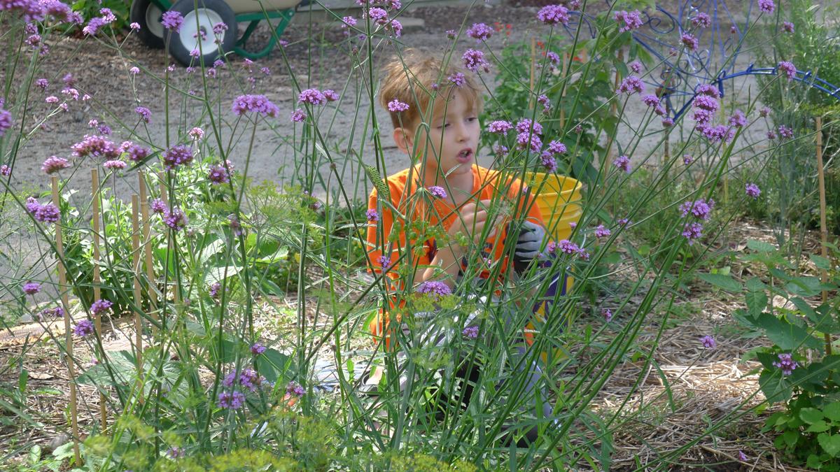 Weeding in the children's garden