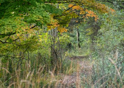 A fall path at Matthaei. (Photo by John Metzler.)