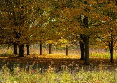 Autumn trees at Matthaei. (Photo by John Metzler.)