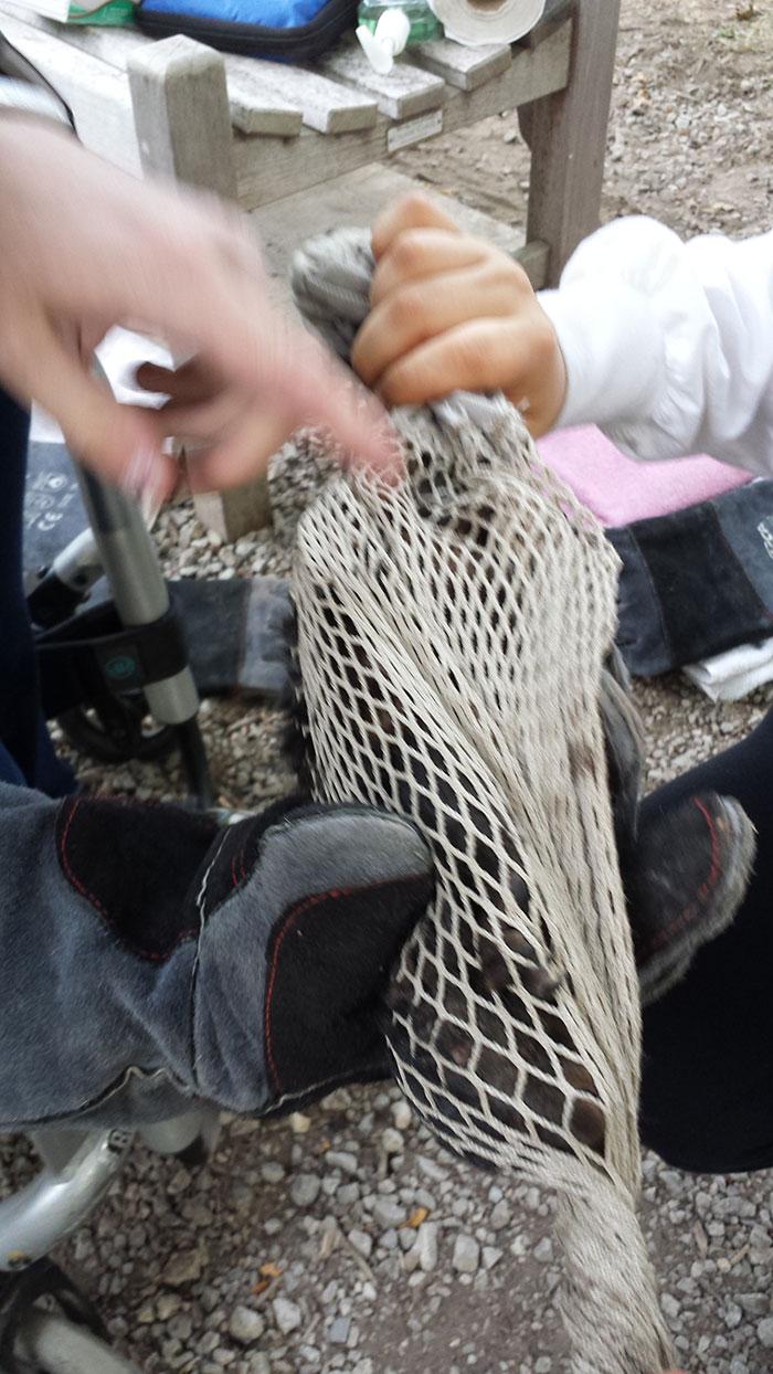 Examining-squirrel-in-capture-bag