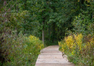 Fall boardwalk at Matthaei. (Photo by John Metzler.)