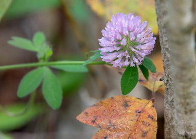 Fall colors at Matthaei. (Photo by John Metzler.)