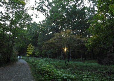 Dusk in Nichols Arboretum. (Photo by Michele Yanga.)