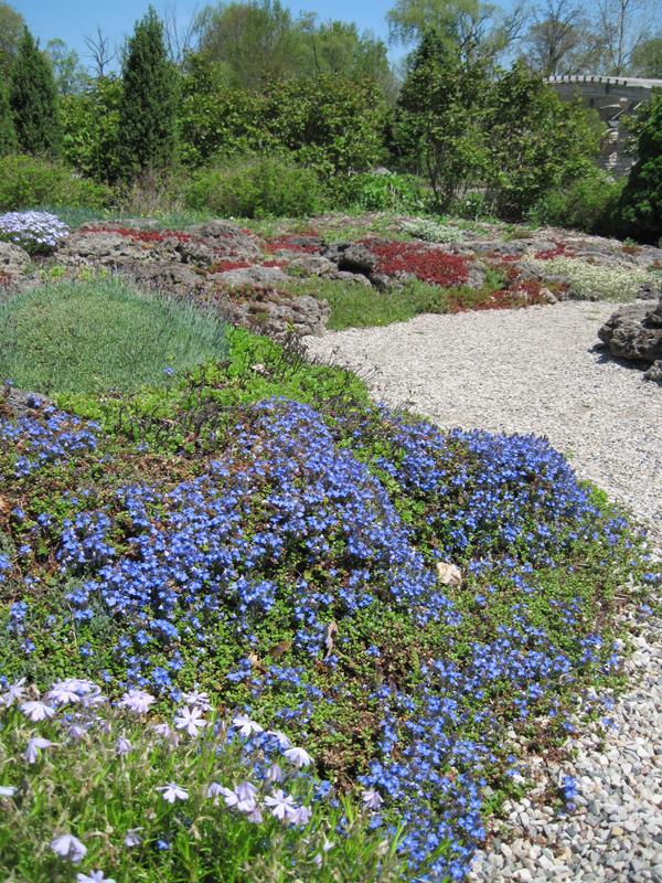 Marie Azary Rock Garden-spring bloom