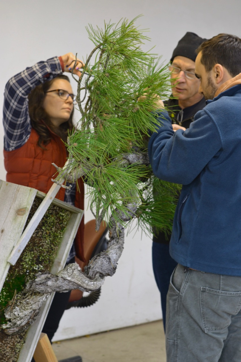 Carmen working on bonsai