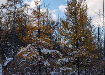 Matthaei Botanical Garden, Ann Arbor, MI