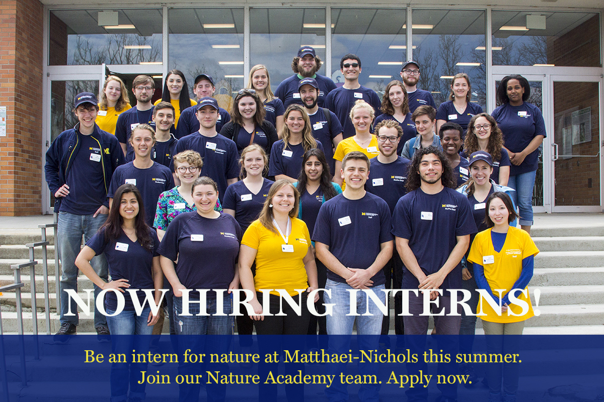 Matthaei-Nichols summer 2020 intern openings
