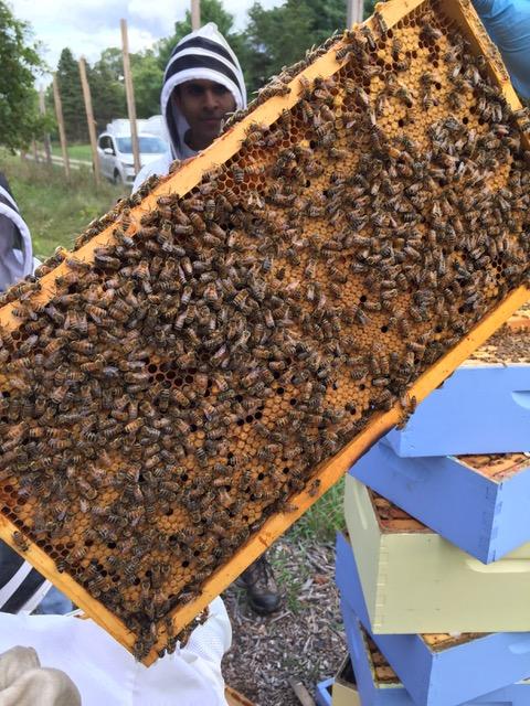 Honeybee hive section