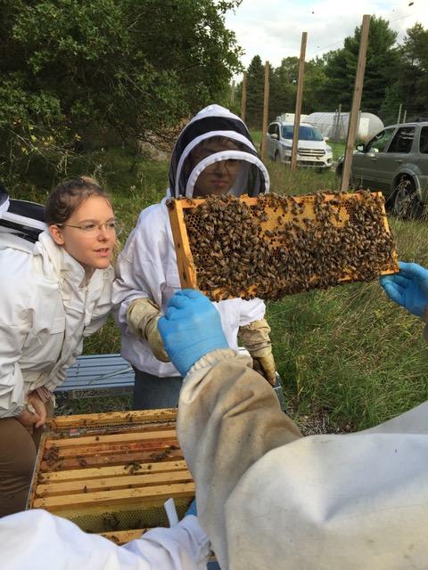 UM Bees with honeybee hive