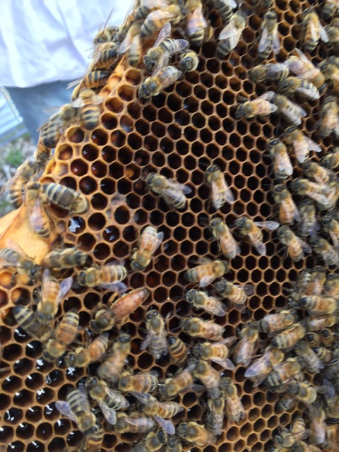 Honeybee hive section close up