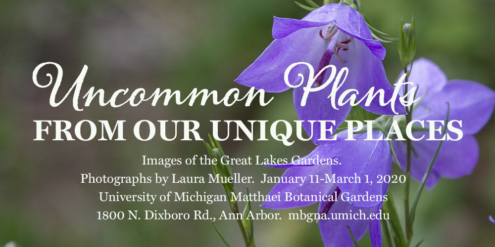 Matthaei exhibit banner for Uncommon Plants