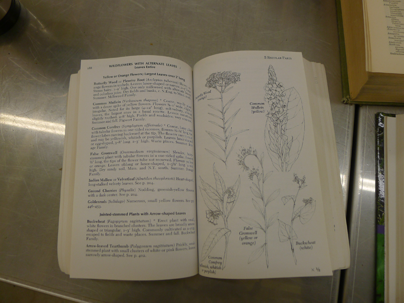 A field guide to plants