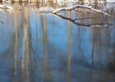 Reflections on Willow Pond
