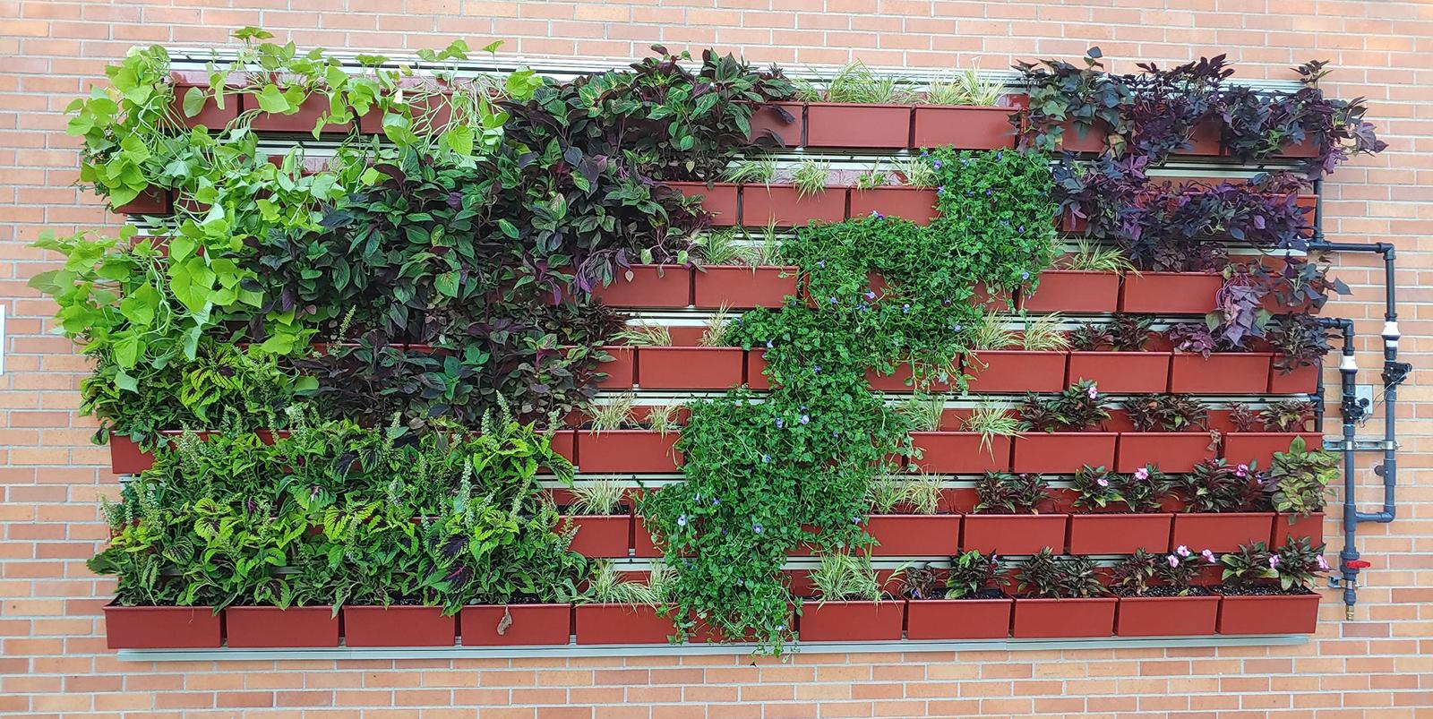 The living wall at Matthaei
