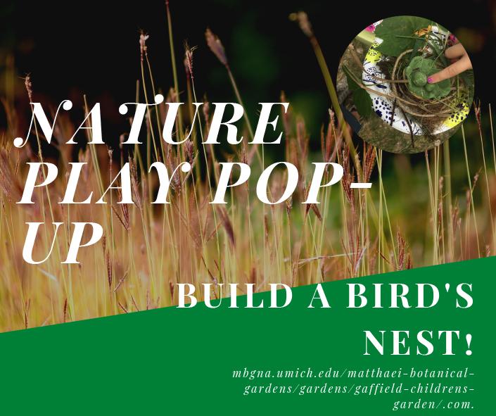 BIrds nest banner