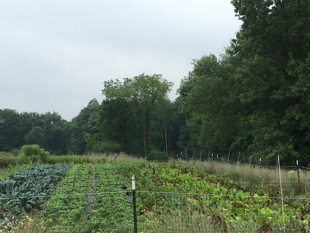Campus Farm crops (with fence)